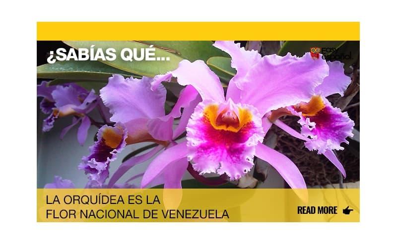 ¿Sabías que la orquídea es la flor nacional de Venezuela? - Easy Español