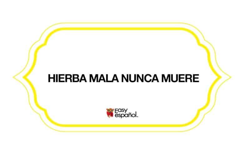 Saying of the day: Hierba mala nunca muere - Easy Español