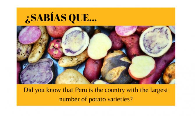 ¿Sabías que Perú tiene la mayor variedad de patatas? - Easy Español