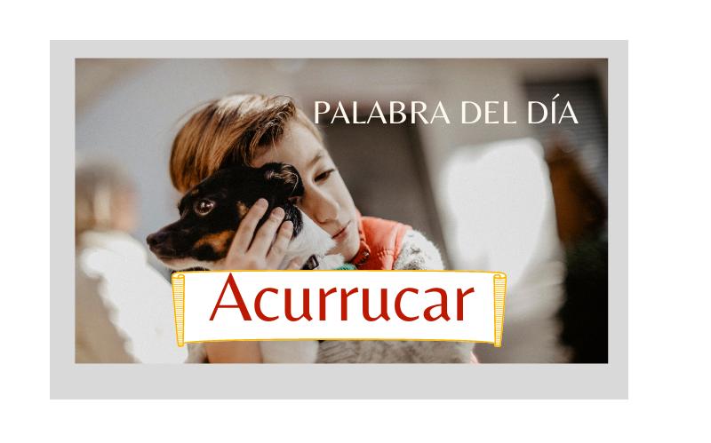La palabra del día: Acurrucar(se) - Easy Español