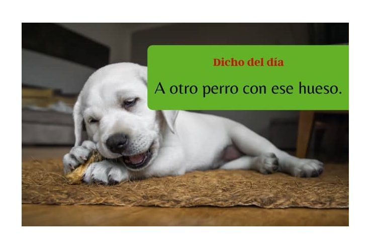 Spanish saying: A otro perro con ese hueso - Easy Español
