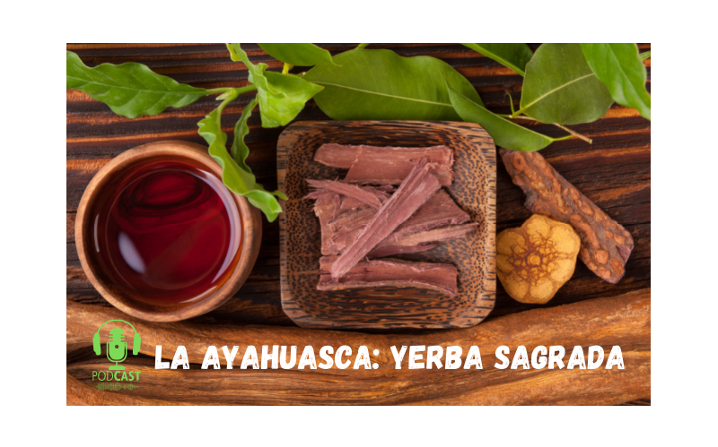 Easy Podcast: La ayahuasca, yerba sagrada - Easy Español