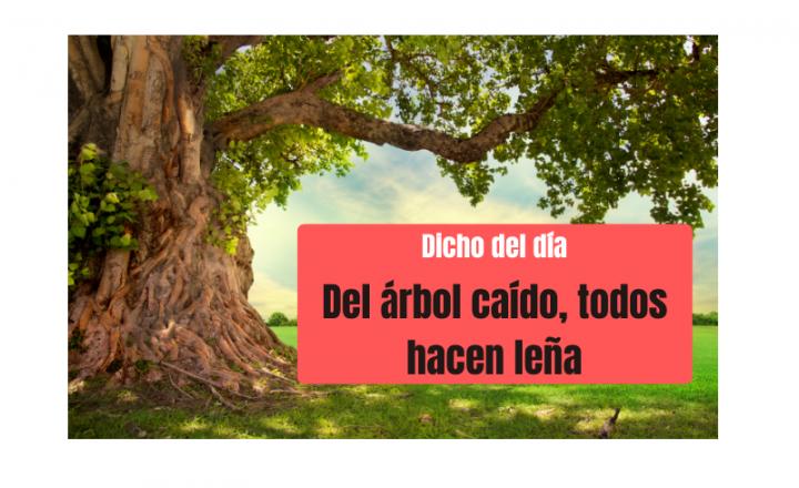 Saying of the day: Del árbol caído, todos hacen leña - Easy Español