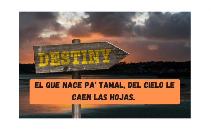 Saying of the day: El que nace pa' tamal, del cielo le caen las hojas - Easy Español