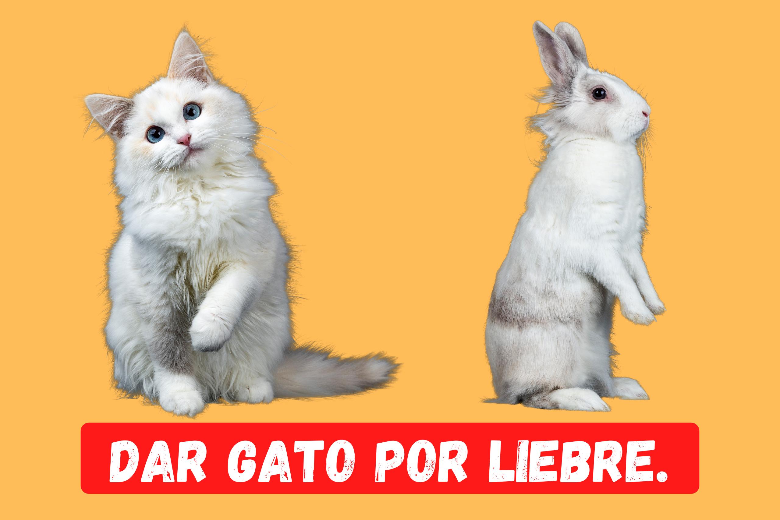 Saying of the day: Dar gato por liebre - Easy Español