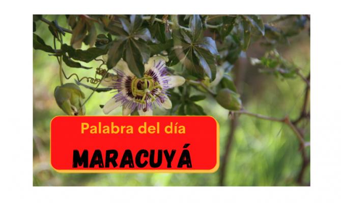 La palabra del día: Maracuyá - Easy Español