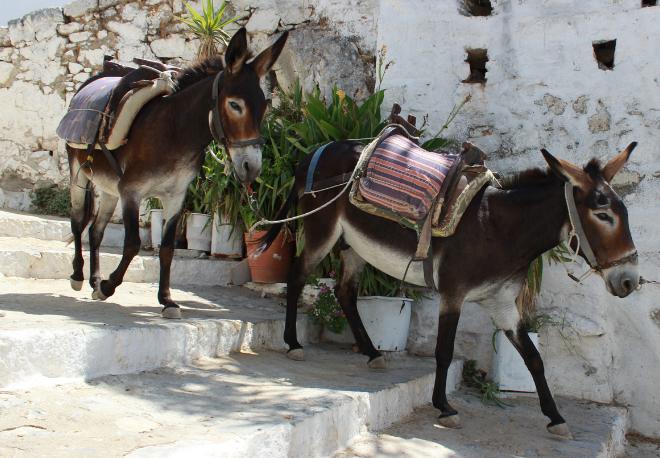 Sayin of the day: El burro delante para que no se espante - Easy Español