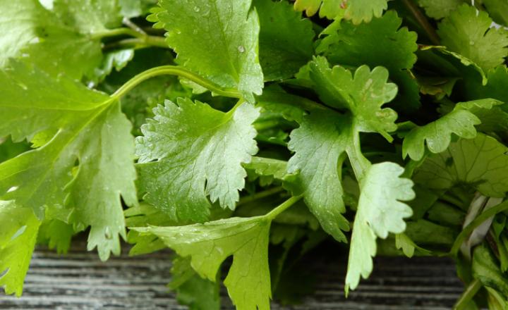 Saying of the day: Bueno es el cilantro, pero no tanto - Easy Español